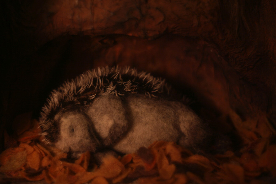 Hedgehog's Home by Eva Cvijanović Premieres Online 17 Dec