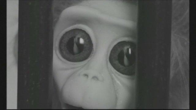 monkey-love-experiments